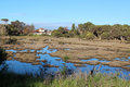Wetlands at big swamp bunbury western australia in late winter provide ideal habitat for nesting water birds after rains Stock Images