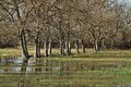 Wetlands of the empordà in catalonia Stock Photography