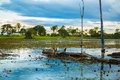 Wetlands in pantanal brazil south america Royalty Free Stock Images