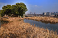 Wetlands park a beautiful view of in china Stock Image