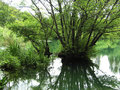 Wetlands or swamp Stock Photography