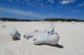 Whale bone an old left from a on a beach Stock Photo
