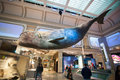Whale model in Natural History Museum in Washington DC,USA. Royalty Free Stock Photo