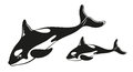 Whale ocean sea family beautiful vector illustration Royalty Free Stock Photo