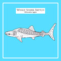 Whale Shark sketch Royalty Free Stock Photo