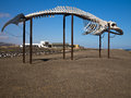 Whale Skeleton Fuerteventura Canary Islands Royalty Free Stock Image