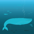 Whale swimming Royalty Free Stock Images