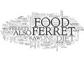 What Do Ferrets Eatword Cloud