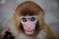 What little monkey found a lovely young it with wide eyes seems to be make it of interest Stock Image