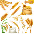 Wheat, barley, oat and rice. Cereals icon vector set