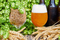 Wheat beer Royalty Free Stock Photo