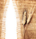 Wheat border Stock Photo