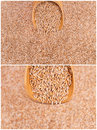Wheat cereals harvest Royalty Free Stock Photography
