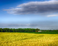 Wheat and corn growing on farm in northern alabama Royalty Free Stock Images