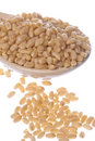 Wheat Corn Macro Isolated Stock Photos
