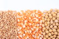 Wheat corn and soybean closeup Stock Images