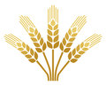 Wheat ear icon design Stock Photo