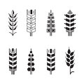 Wheat ear symbols for logo icon set, leaves icons Royalty Free Stock Photo