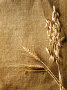 Wheat Ears border Royalty Free Stock Photos