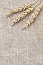 Wheat ears on burlap background closeup Stock Image