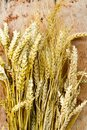 Wheat ears and grain Royalty Free Stock Photo