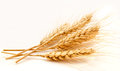 Wheat ears isolated on a white background Royalty Free Stock Image