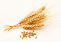 Wheat ears isolated on a white and seed background Royalty Free Stock Image