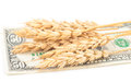 Wheat ears and money Royalty Free Stock Photo