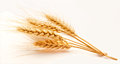 Wheat ears on a white background Stock Photo