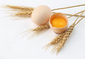 Wheat, Egg with yolk Stock Photography