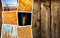 Wheat farming in agriculture photo collage Royalty Free Stock Photo