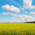 Wheat field and blue sky power lines Stock Image