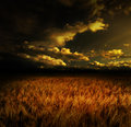 Stock Photo Wheat field