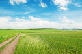 Wheat field and country road Royalty Free Stock Photo