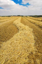 Wheat Field Harvest Royalty Free Stock Photos