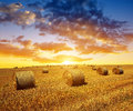 Wheat field after harvest with straw bales Royalty Free Stock Photo