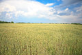 Wheat field landscape Royalty Free Stock Photos