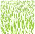 Wheat field. Leaves and ears of cereal. Agriculture straw. Banner background. Green grass meadow. Silhouette vector line Royalty Free Stock Photo