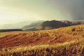 Wheat field in mountains before thunderstorm shot lesotho Royalty Free Stock Photos
