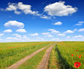 Wheat field road in with blue sky Stock Photo