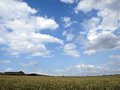 Wheat field and sky Royalty Free Stock Photo