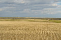 Wheat field and small village in Canadian Prairies Royalty Free Stock Photo
