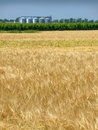 Wheat field in spring and silo Stock Images