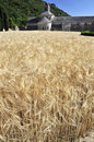 Wheat fields at the Abbey of Senanque, France Stock Images