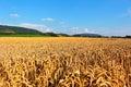 Wheat Fields In Countryside