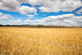 Wheat Fields in Moolort Plains Royalty Free Stock Photo