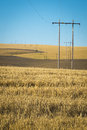 Wheat fields, power lines, eastern Washington Royalty Free Stock Photo