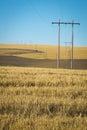Wheat fields, power lines, eastern Washington Royalty Free Stock Photo