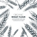 Wheat flour label design template. Sketch vector illustration of cereal ears. Bakery package background