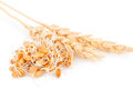 Wheat germ with ears Royalty Free Stock Photo
